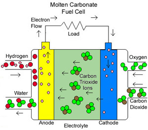 Numerical analyses of proton electrolyte membrane fuel cell's